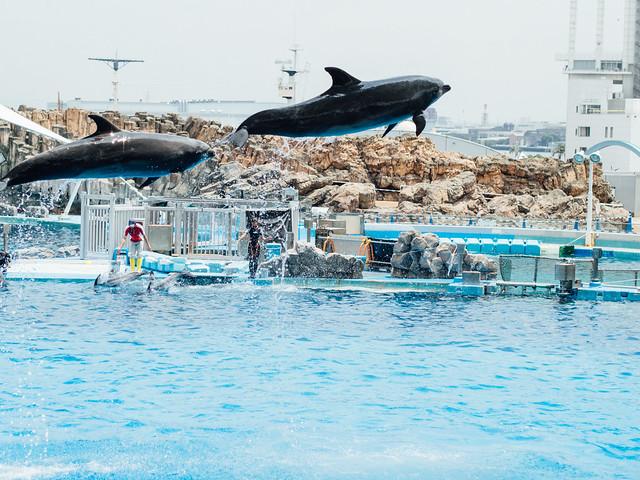 160730_Aquarium-8