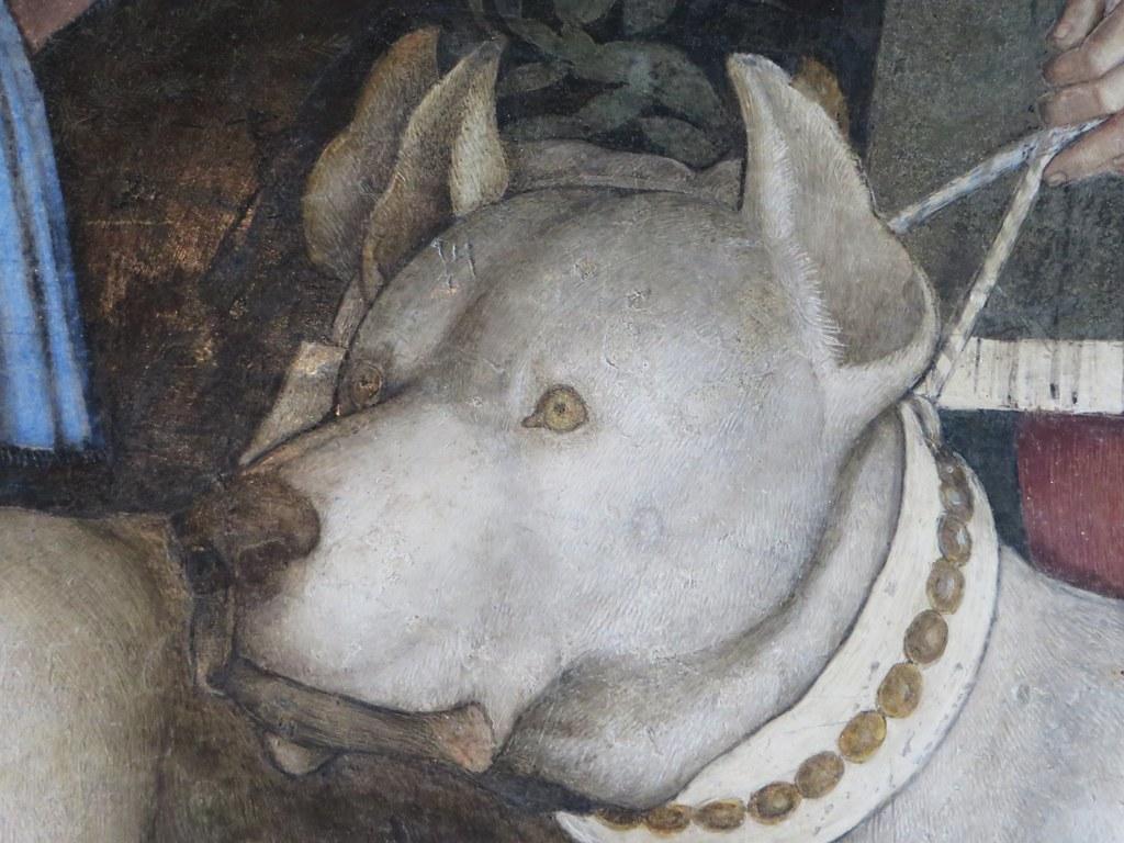 Beaut canine fresques d 39 andrea mantegna mur de la renco for Oculo della camera degli sposi