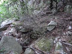 Arrivée au ruisseau sous le grand pin