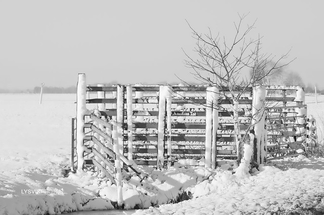 Winter landscape with fence