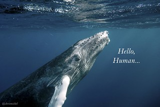 Hello Human | by Christopher.Michel