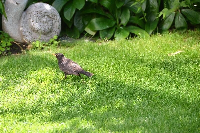 Blackbird 19.07 (3)