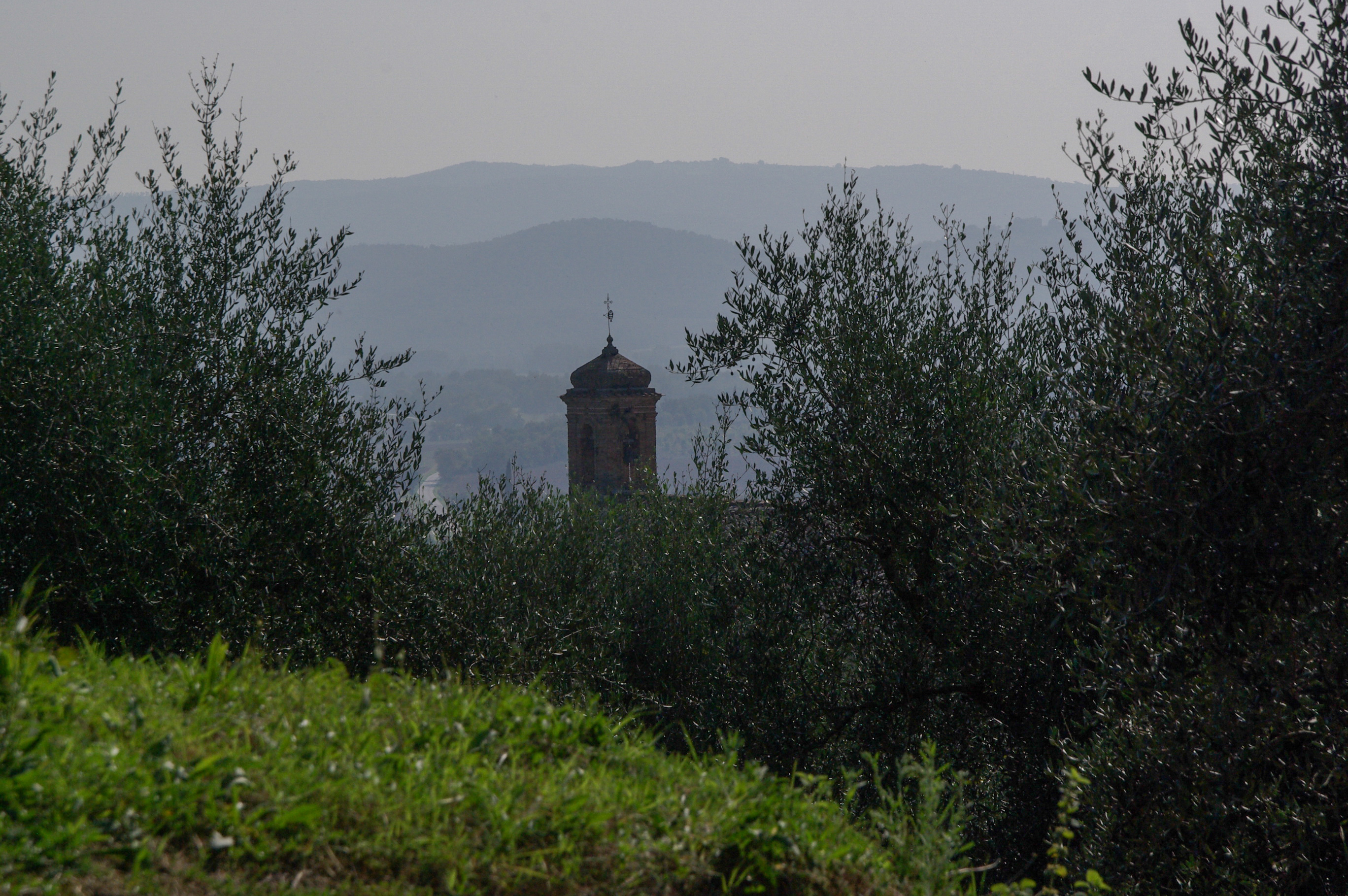 tower & olive trees