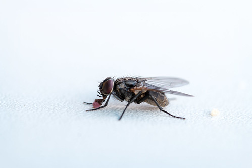 Fliege#05