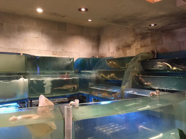 Dirty fish tanks at Koi Palace