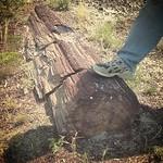 woodfossilmt