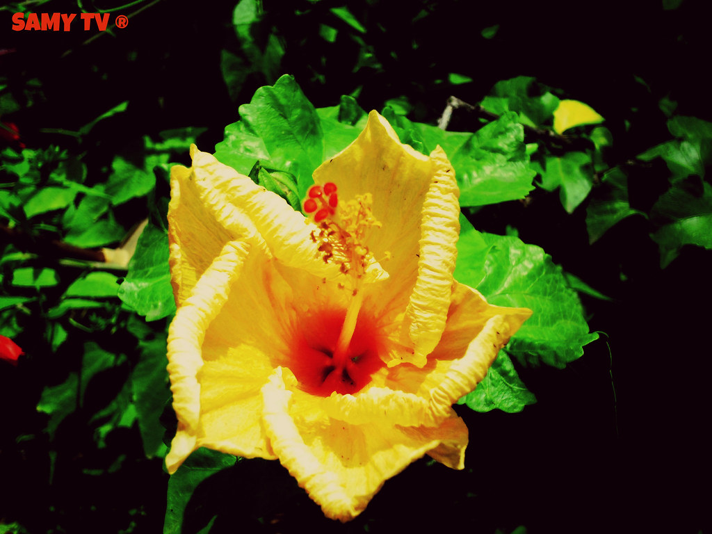 Orange Yellow Flower Fleur Jaune Orange Samy Tv Flickr