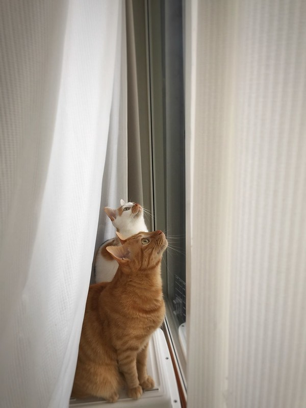 #cat #cats #catsofinstagram #catstagram #instacat #instagramcats #neko #nekostagram #猫 #ねこ #ネコ ネコ部 #猫部 #ぬこ #にゃんこ #ふわもこ部 #茶トラ #三毛猫