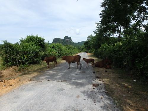phong-nha-road-8