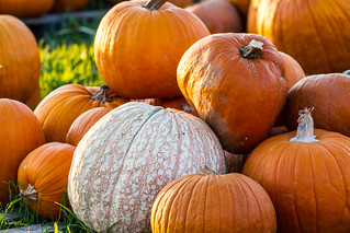 Pumpkin Patch 10-22-2014-15 | by jdg32373
