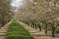 Orchard_Winters_CA_20150228_IGP0362