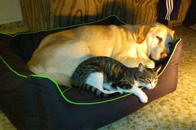 """9º Concurso Fotográfico: """"Como el perro y el gato"""" Fotos participantes 16679814820_d7cfba8d21_z"""