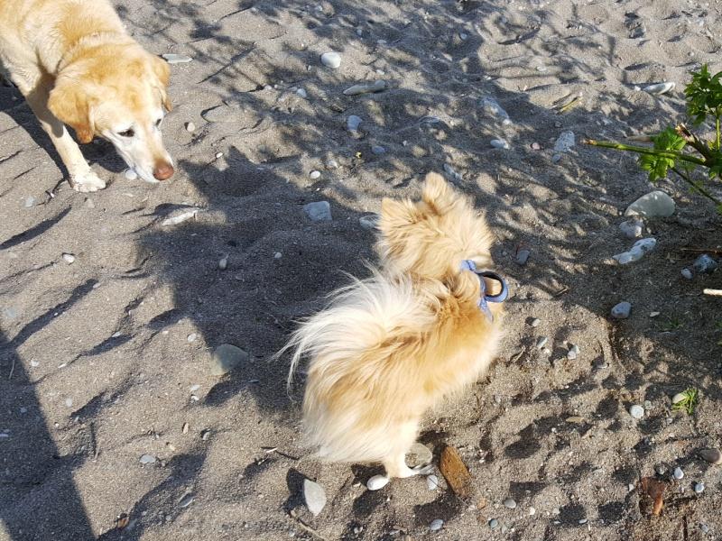 Toronto dog beach