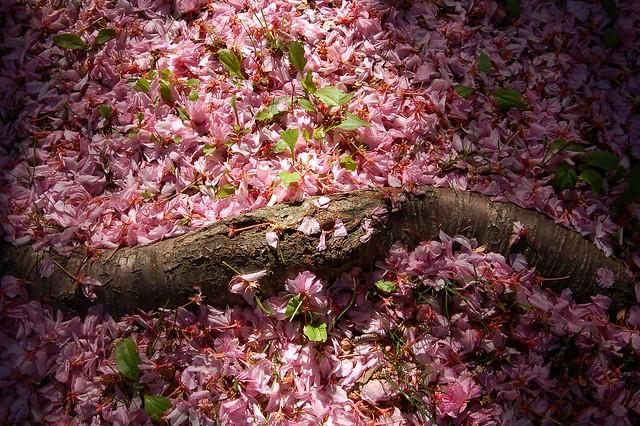 Petals and Root