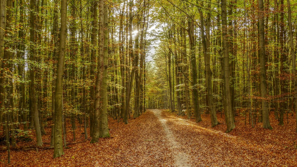 Picnic Place In Forest Brussels (The Sonian Forest). Stock Footage ...