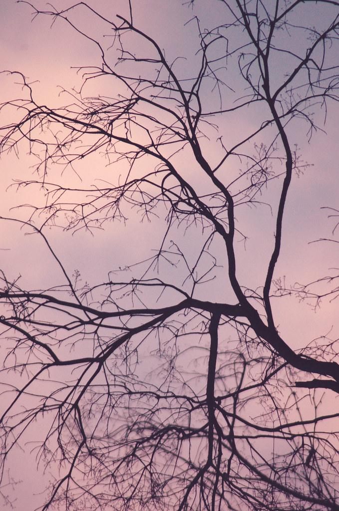 Como las venas de un cuerpo las ramas de un arbol | Gesù | Flickr