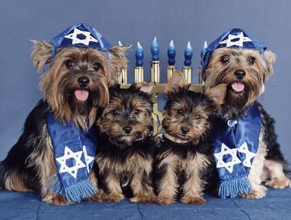 more-hanukkah-dogs