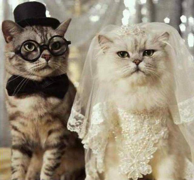 Cute Animals Wedding