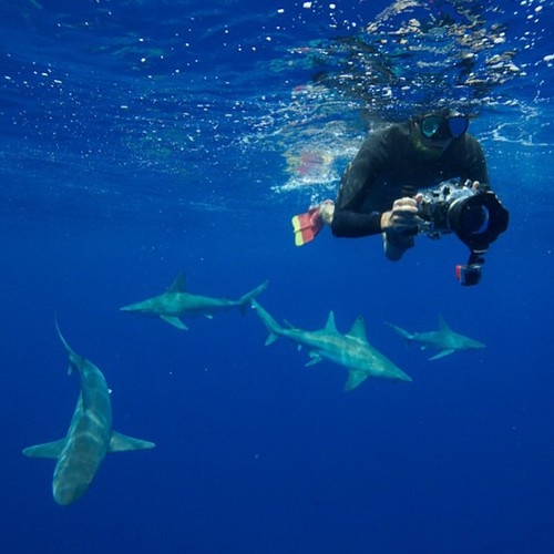 Can't wait to dive with these guys again, photo by @juansharks