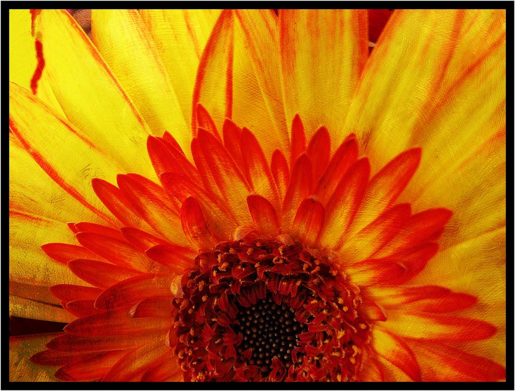 Fleur De Feu Flower Fire Texture Thorunn Thorsteinsdotti Flickr