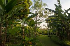 Jardín Botánico Reina Sirikit