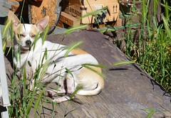Beaker Sunbathing