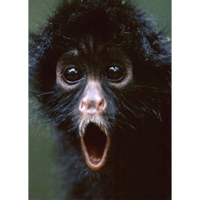 omg that is one shocked little monkey animals monkey flickr