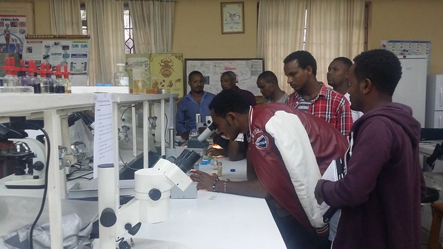 Coenurosis control: Training on faecal examination techniques in Ethiopia
