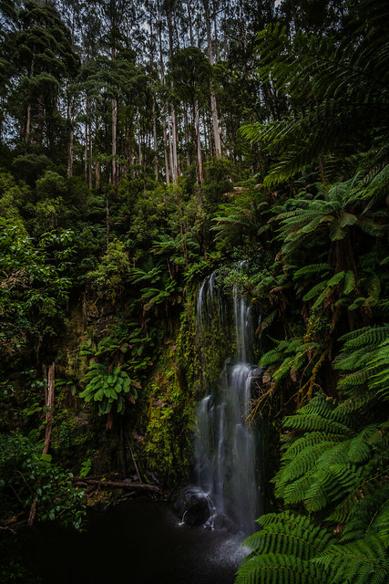 Otway National Park Flickr Photo Sharing