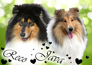 collie java reco