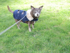 Hyzzie in her coat