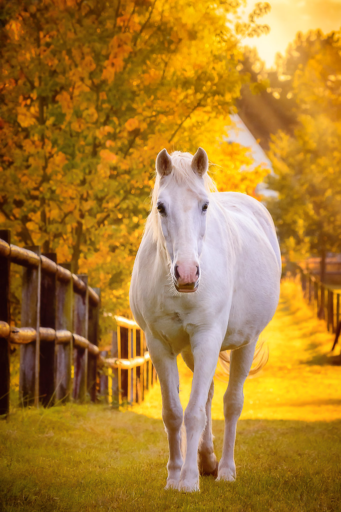 White horsie changed my plans | My goal was to shoot a ...