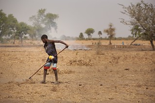 Tilling soil in Senegal | by IFPRI