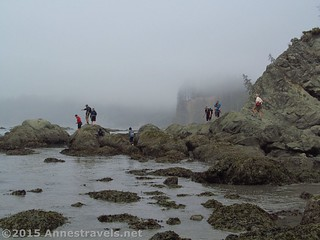 Exploring Tidepools | by Anne's Travels