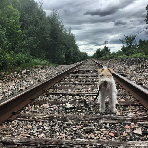 Piper on the tracks
