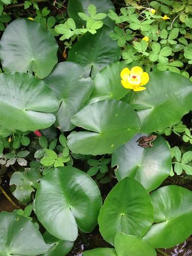 生態池熱鬧的生態看得到。攝影:廖靜蕙