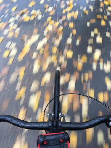 Bike paths fall | by Tom Babin