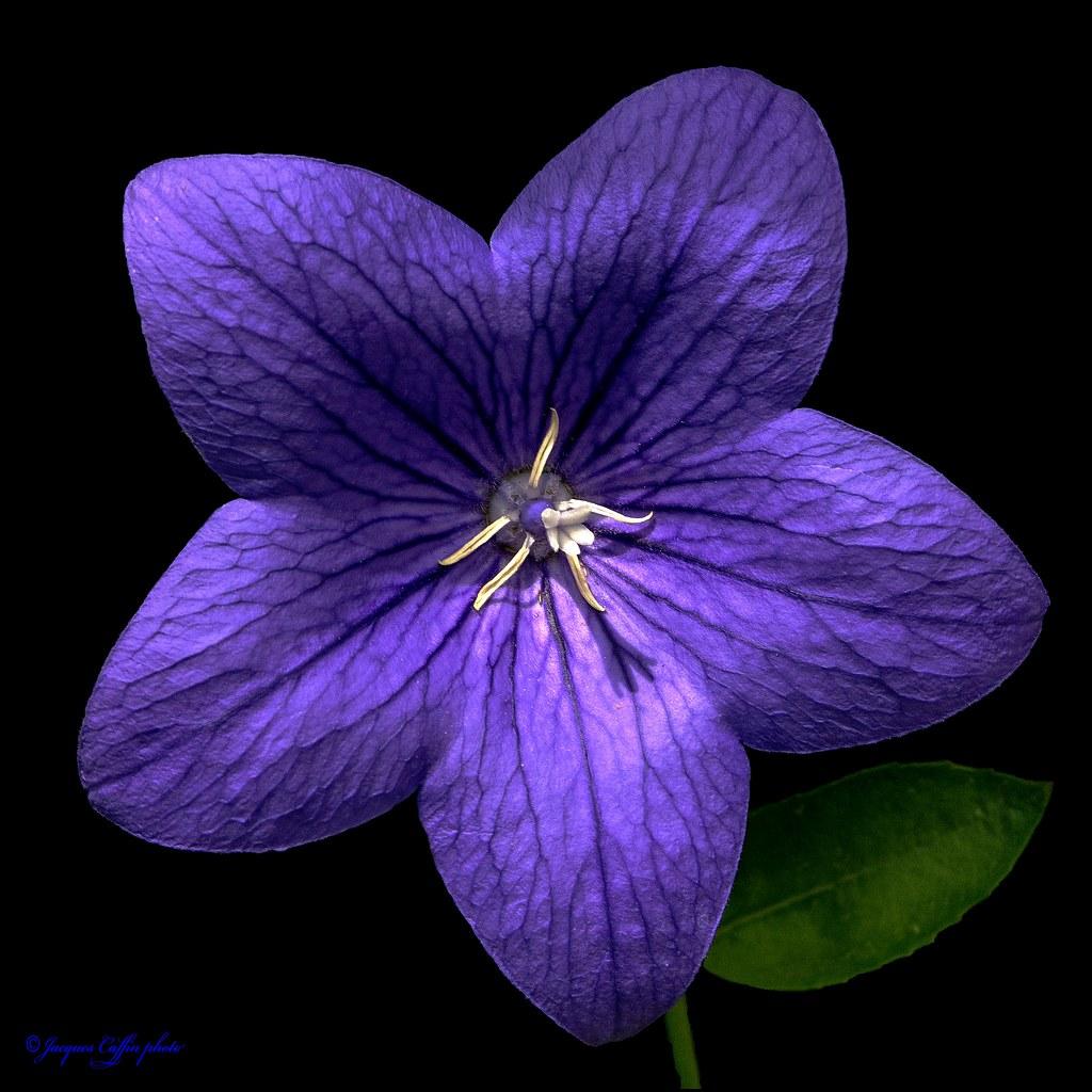 Je Suis Resté Fleur Bleue... Drôme France