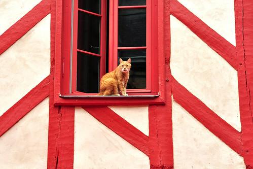 Vannes (Bretagne): Rotes Fachwerkhaus mit roter Katze am Fenster. Foto: Brigitte Stolle 2016