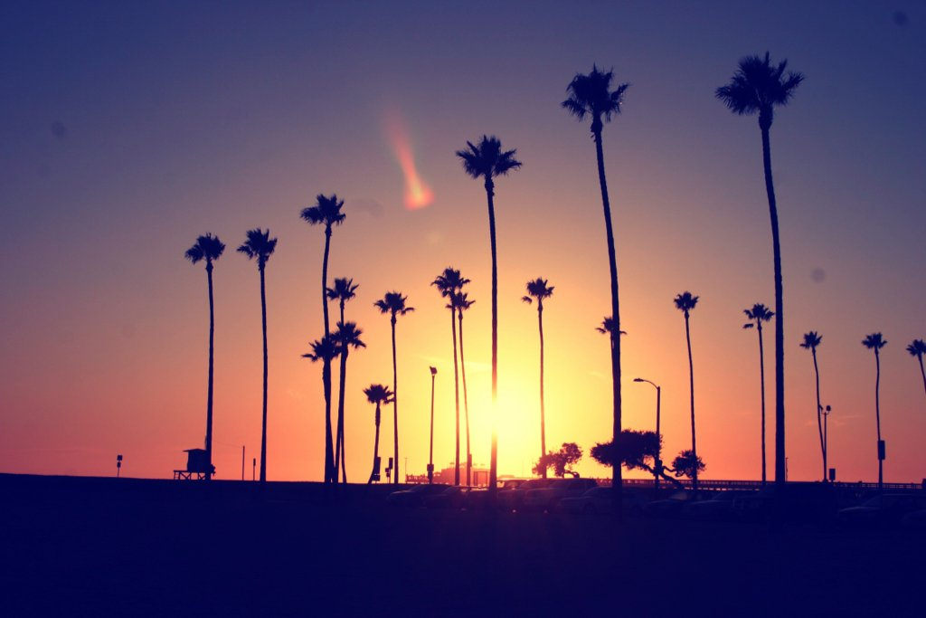 Beach California Palm Photography Sky Favim 403565