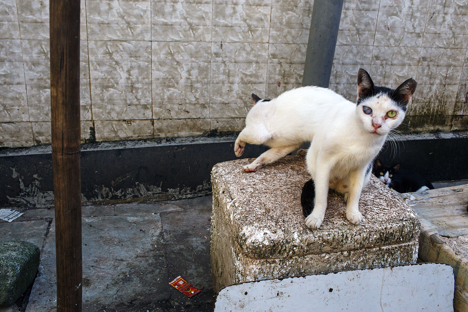 Cats - Mumbai, India | by Maciej Dakowicz