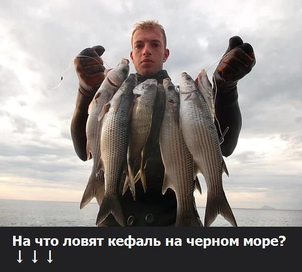 рыбалка на черноморскую кефаль