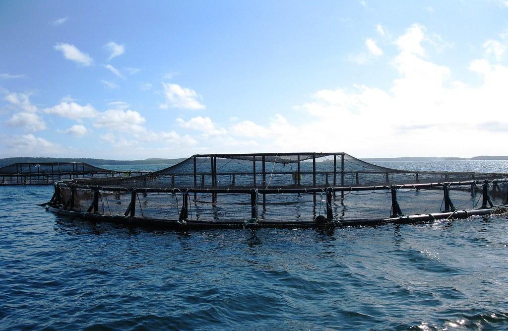 Aquaculture Coastal Net Pens Off The Coast Of Maine