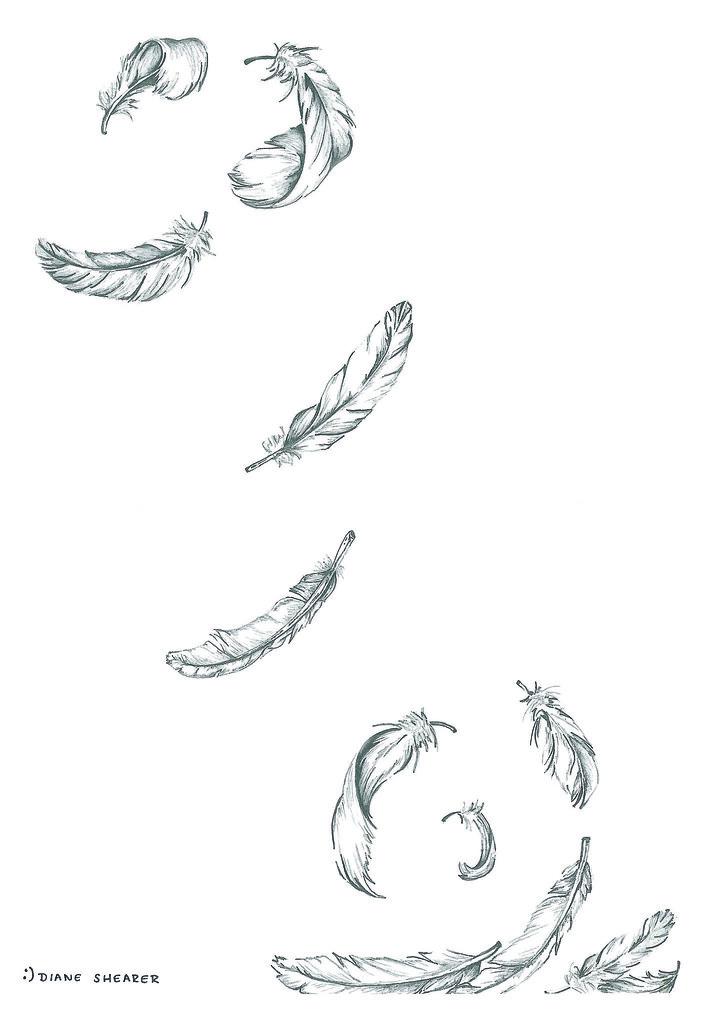 falling feathers medium graphite pencil diane shearer flickr