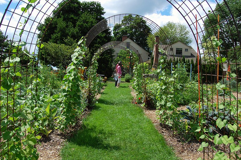 5 Things To Know About This Year S Vegetable Garden Tower Hill
