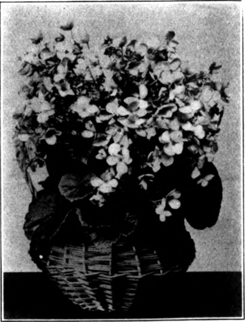 IMAGE FROM PAGE 532 OF FLORISTS REVIEW MICROFORM FLICKR
