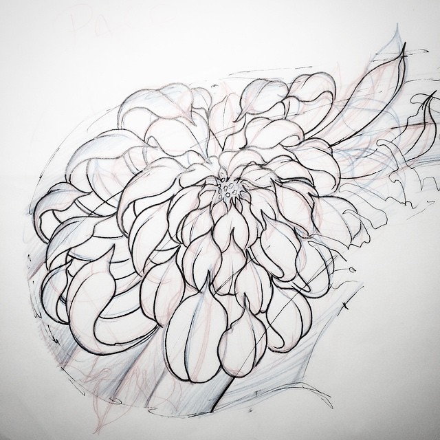 Japanese Flower Line Drawing : Drawing day sketch japanese flowers shiragiku chry