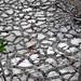 Mudcracks along the shoreline of Storr's Lake (San Salvador Island, Bahamas) 11