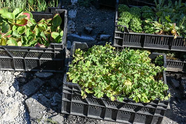 A la Maladrerie, l'ex-parking des Joyeux devenu jardin