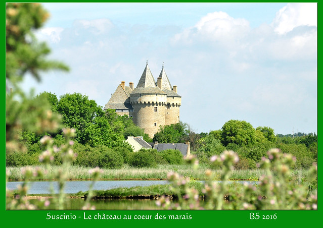 Schloss Suscinio, Bretagne, Rhuys-Halbinsel - Natur Meer Moor - Le château au coeur de marais - Landschaft Vögel Pflanzen ... Fotos und Fotocollagen: Brigitte Stolle 2016